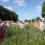 Feldtag der EZG in Lüben (Niedersachsen) präsentiert Ergebnisse aus dem dreijährigen Praxisanbau von Wildpflanzenmischungen nach dem ELKE-Konzept